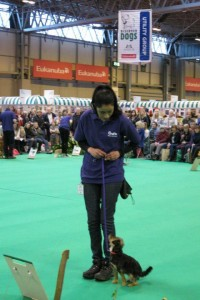 Cheshire Dog School at Crufts 2013