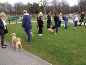 Adult Dog Beginners outside training week 3