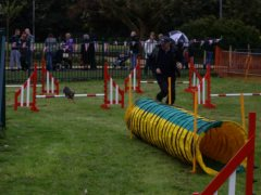 agility-for-the-queen
