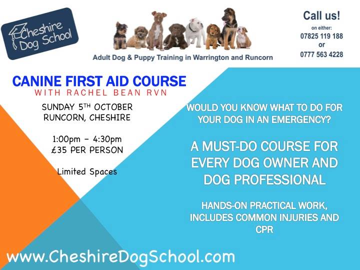 canine first aid Learn basic pet first aid and how to respond during an emergency, including techniques of basic cpcr certificate of completion included.