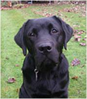 cheshire-dog-school-henry